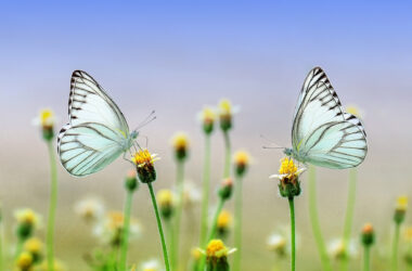 Butterfly-on-Yellow-Flower-Pic
