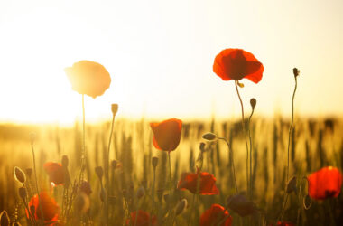 Yellow-Red-Flowers-Wallpaper