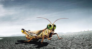 3d-Insect-HD-Image
