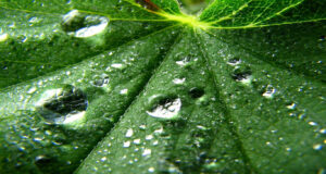 3d-Water-Drops-on-Leaf-Image