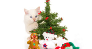 Cat-and-Christmas-Tree-Pic