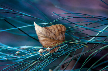 Dry-Leaf-HD-Image