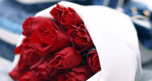 Red-Rose-Flowers-HD-Pic