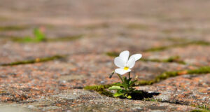 Small-Flower-HD-Pic