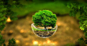 Small-Tree-3d-HD-Image