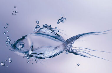 Water-Fish-3d-HD-Image