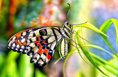 Beautiful-Butterfly-Pic-HD