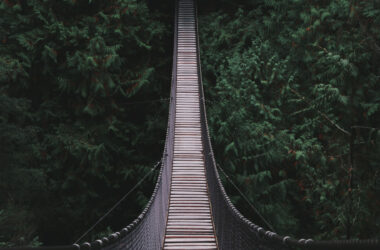 Bridge-in-the-Middle-of-the-Forest-Pic