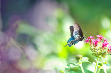 Butterfly-on-Pink-Flower-Image-HD