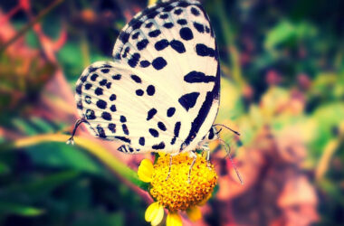 Butterfly-on-Yellow-Flower-HD-Pic