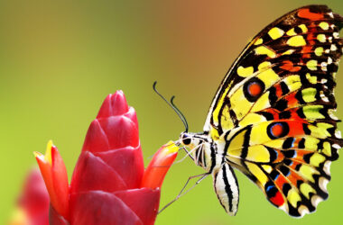 HD-Image-of-Butterfly