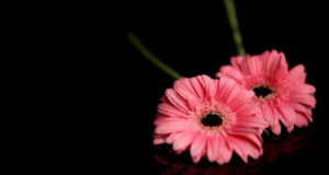 Pink-Petaled-Flowers-Pic
