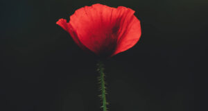 Red-Flower-Image