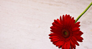 Red-Flower-Pic-HD
