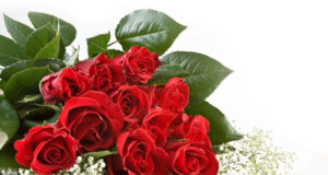 Red-Rose-Flowers-Full-HD-Pic