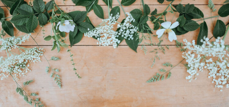 White-Petaled-Flowers-HD-Pic
