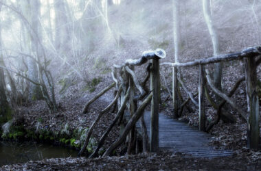 Wooden-Bridge-in-Forest-HD-Pic