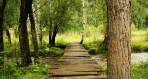 Wooden-Bridge-in-Forest-Image-HD