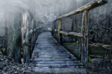 Wooden-Bridge-in-Forest-Pic
