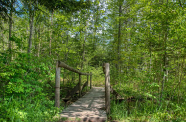 Wooden-Bridge-in-Forest-Pic-HD