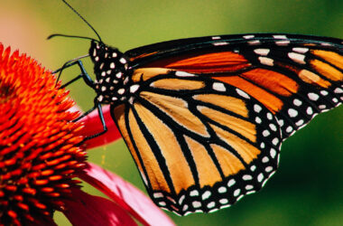 Photo-of-Butterfly-on-Flower
