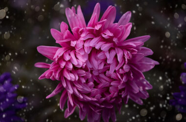 Pink-Flower-Pic