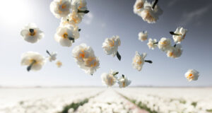 White-Flowers-HD-Image