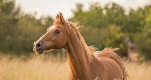Brown-Horse-Standing-on-Grass-Field-HD-Pic