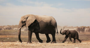Elephant-with-Baby-Pic