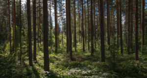 Forest-During-Daytime-Image