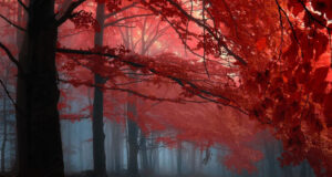 Forest-Image