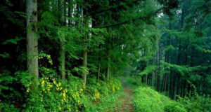 Forest-Photo