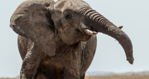 HD-Image-of-Elephant