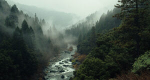 Aerial-Photo-of-River-Between-Trees