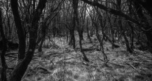 Black-and-White-Image-of-Forest