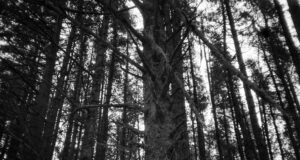 Black-and-White-Pic-of-Forest