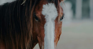 Brown-Horse-Image