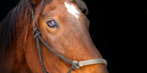 Brown Horse Pic