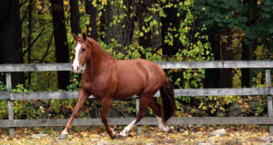Brown-Horse-Running-HD-Photo