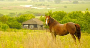 Brown-Horse-Standing-on-Grass-Field-Pic-HD