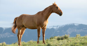 Brown-Horse-Standing-on-Green-Grass-HD-Pic