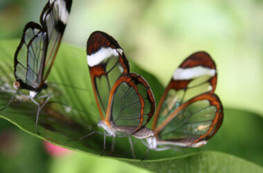 Butterflies-on-Green-Leaf-Pic