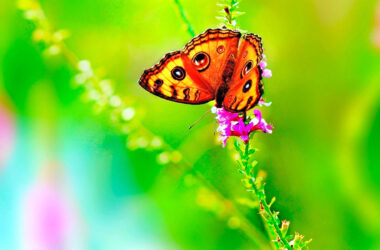 Butterfly-on-Beautiful-Flowers-Pic-HD