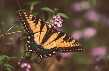 Butterfly-on-Flower-High-Definition-Image