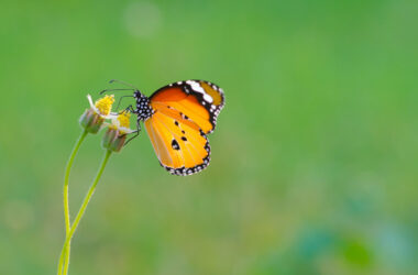 Butterfly-on-Flower-High-Definition-Pic