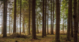 Forest-During-Daytime-Image-HD