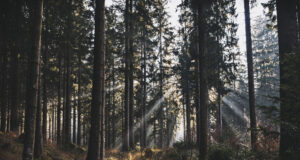 Forest-During-Daytime-Photo-HD