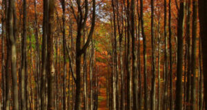 Forest-During-Daytime-Pic