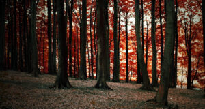 Forest-High-Definition-Image