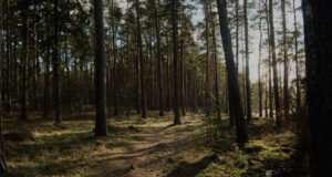 Forest-Photo-HD